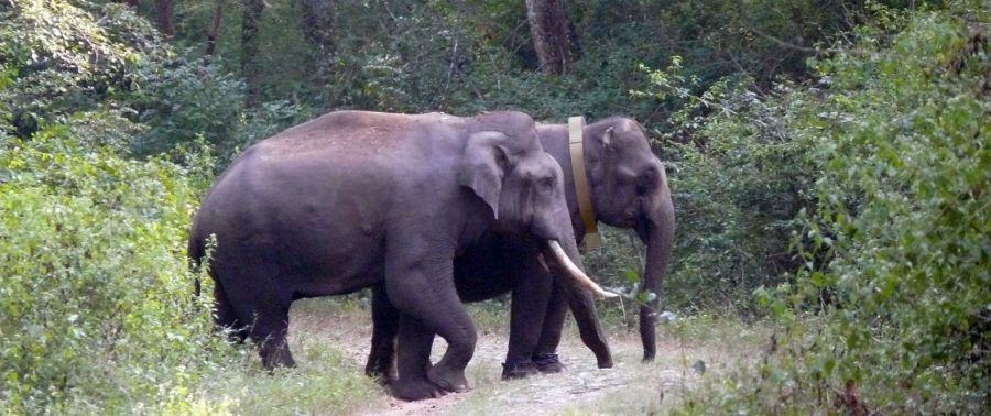 2 éléphants